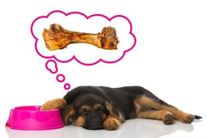 Die Ernährung des Hundes – ein Kurs der Hundeschule Hugo Schwitter